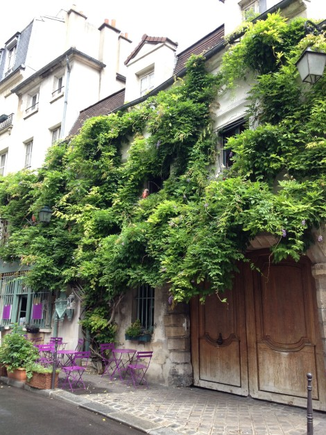 Wisteria on a building across the street